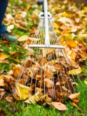 leaf-removal-garden-services-maintain-scotland-renfrewshire