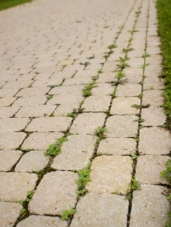 weed-removal-driveway-cleaning-maintain-scotland-renfrewshire