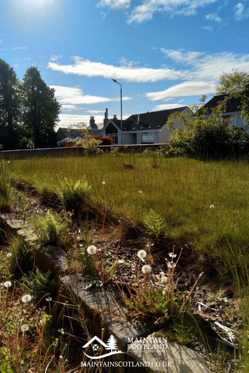 maintain-scotland-gallery-garden-transformations-glasgow-0011