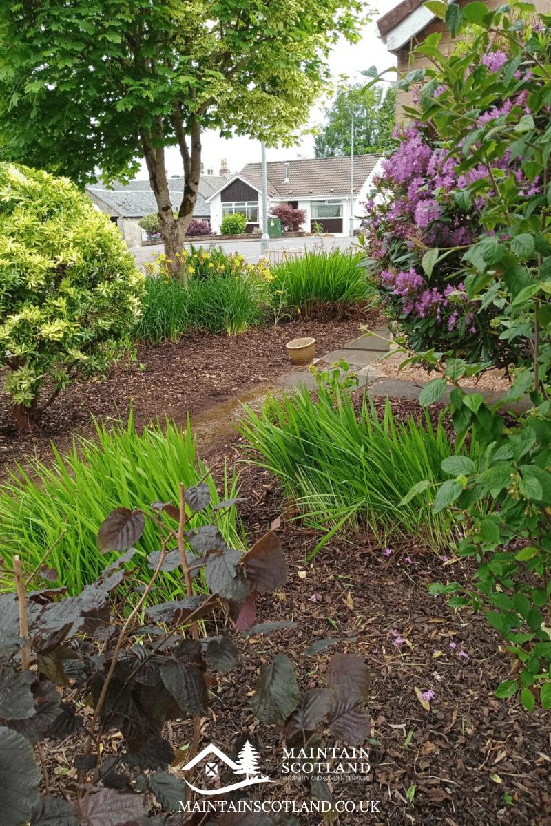 maintain-scotland-gallery-garden-transformations-glasgow-0013