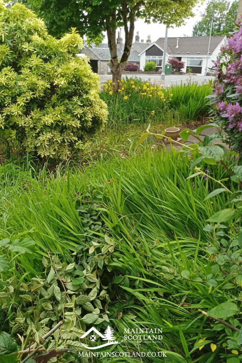 maintain-scotland-gallery-garden-transformations-glasgow-0014