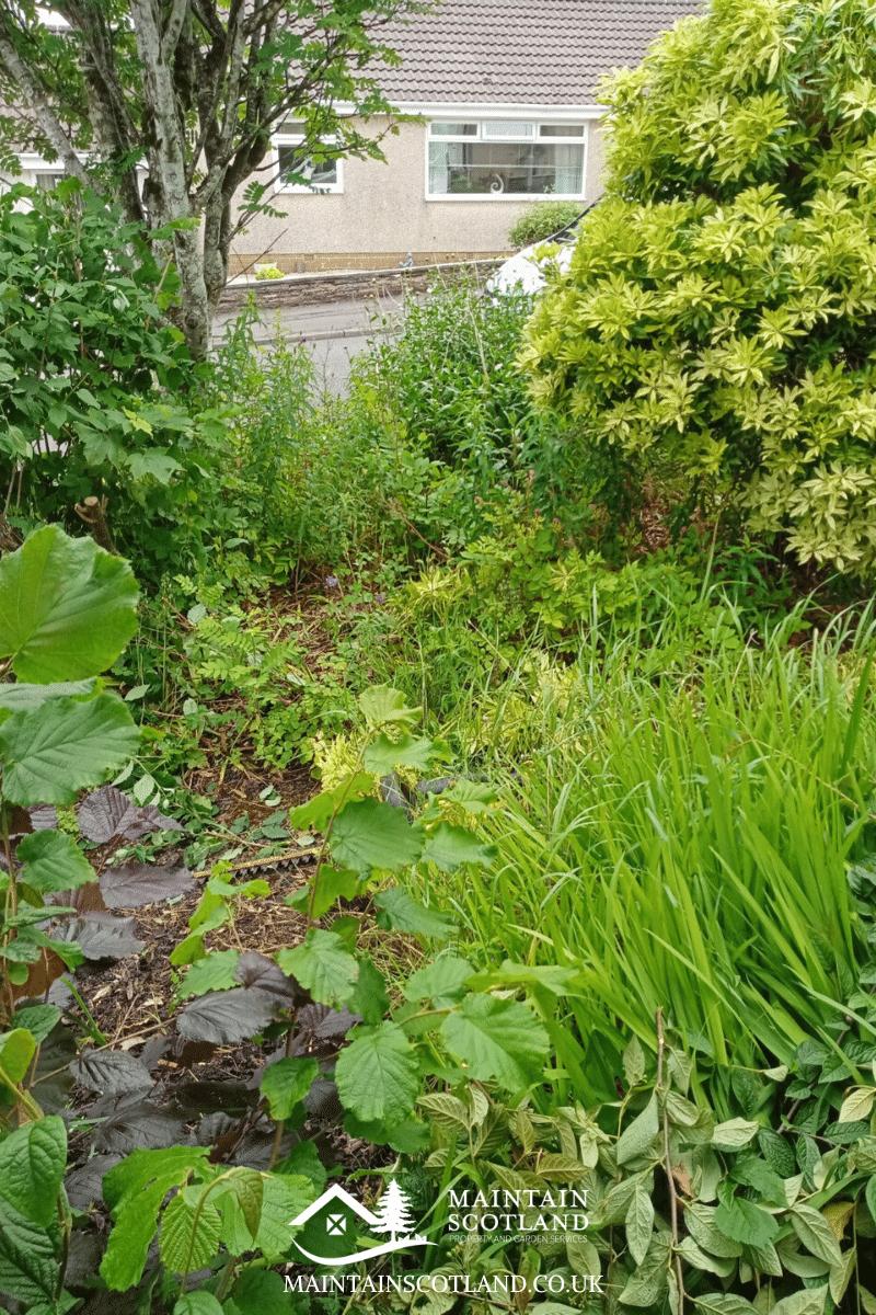 maintain-scotland-gallery-garden-transformations-glasgow-0015