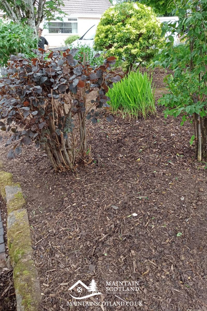 maintain-scotland-gallery-garden-transformations-glasgow-0016