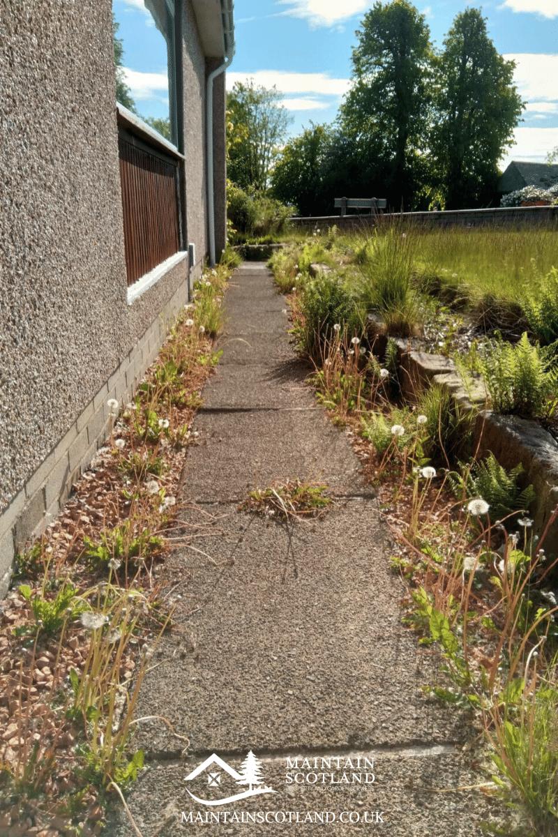 maintain-scotland-gallery-garden-transformations-glasgow-009