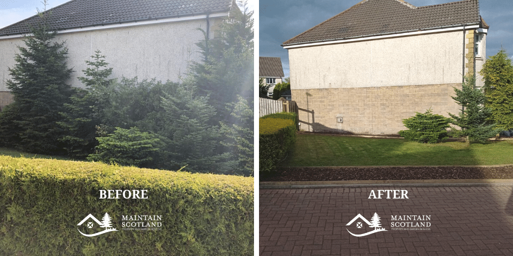 maintain-scotland-cumbernauld-garden-transformation-hedge-removal